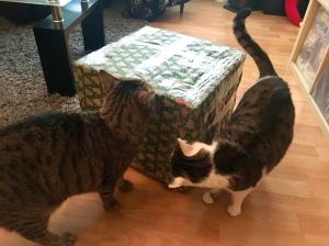 Max und Fox mit Paket
